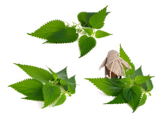 Stinging Nettle Isolated on white background