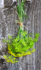 Fresh Dill flowers on old wooden background