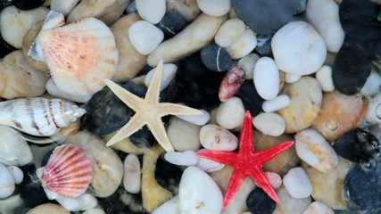 Starfishes, pebble stones and seashells in crystal clear water.