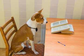 Back to school - smart school-dog reviews course of mathematics.
