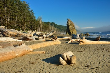 Rialto beach with drift wood