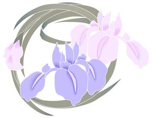 Iris shaded