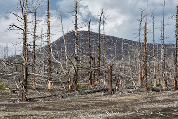Landscape of Kamchatka: Dead wood