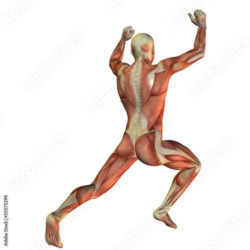 Muskelstruktur beim Gewichtheber von hinten
