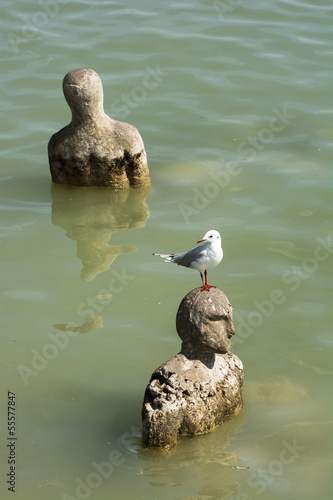 Gull sitting on a head of statue in water