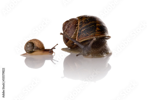 Mother and child snails