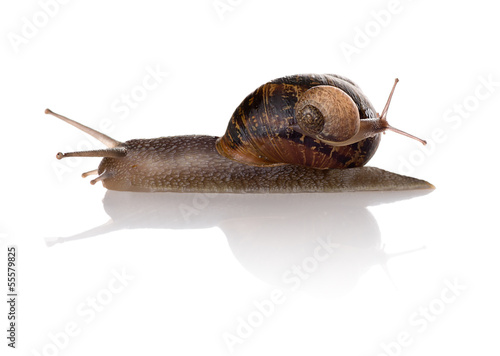 Mother and baby snails isolated on white background