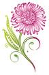 Chrysantheme, Ranke, Blume, Blüte, pink, grün