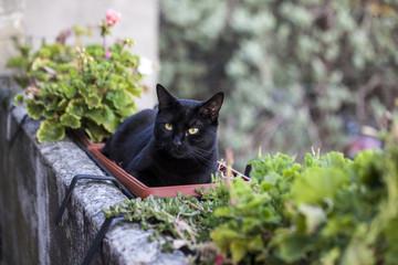 Gatto nero disteso su un porta piante in terrazzo