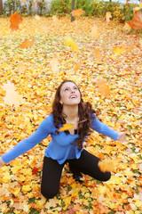 fallende goldene ahornblätter