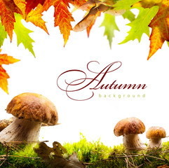 autumn background with yellow leaves and autumn mushroom
