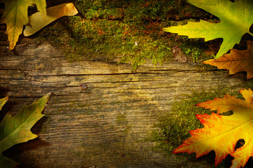 art autumn leaves on  old wood background