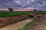 Panorama at paddy fields