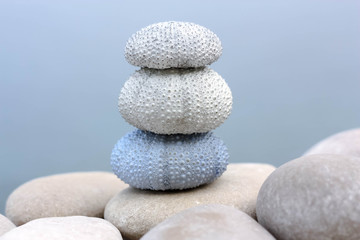 Sea urchin shells on a white pebbles