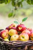 Fototapety love apples