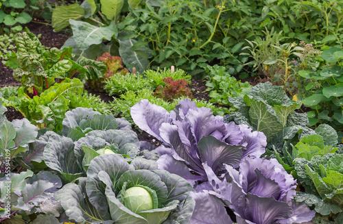 Gemüsegarten - 55594209