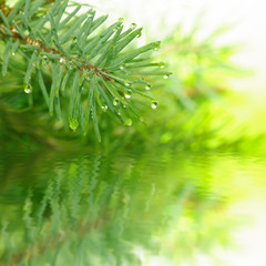 fir branch over the water