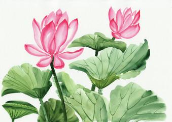 Watercolor painting of pink lotus flower