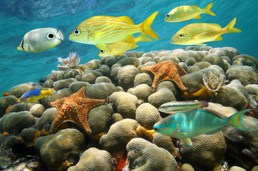 Starfish and tropical fish in a coral reef