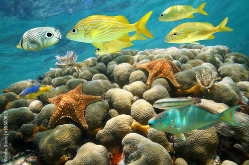 Starfish and tropical fish in a coral reef - 55600825
