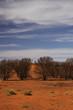 Sandwüste in Australien mit Büschen