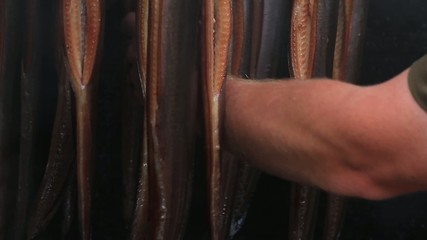 Fischer testet Aale im Räucherofen