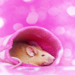 cute little mouse resting in a sleeve