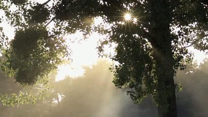 Soleil perse au travers d'un arbre