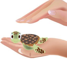 protezione tartaruga