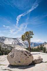 Landscape of trees and rock in Yosemite National Park, Californi