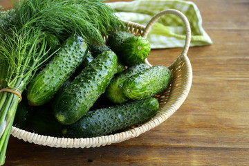 Fresh green cucumbers in a wicker basket