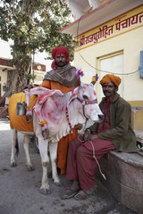 India, Pushkar, indian men and a sacred cow