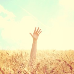 hand sticking out of wheat field