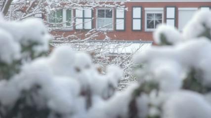 Schnee fällt vom Baum