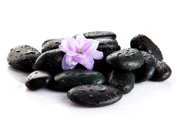 Spa stones and purple flower, isolated on white. flower in stone