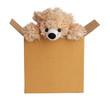 Teddy bear peeking out of a box