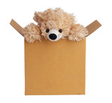 Teddy bear peeking out of a box