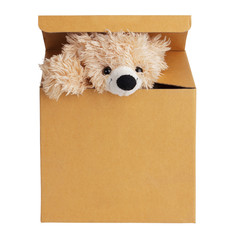 Plush bear peeking out of a cardboard box
