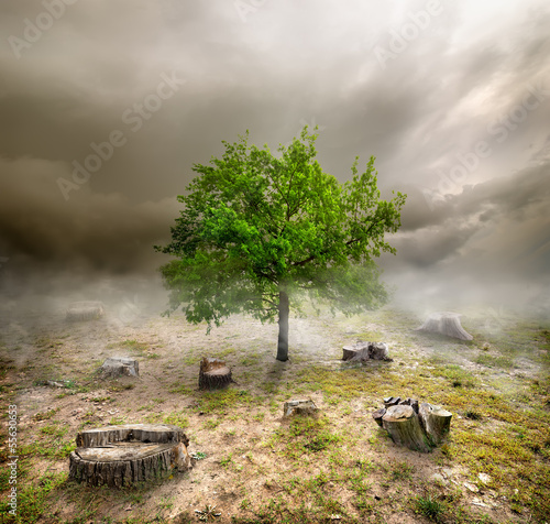 Green tree among the stumps