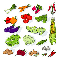 Hand drawn vegetables set. Vector.