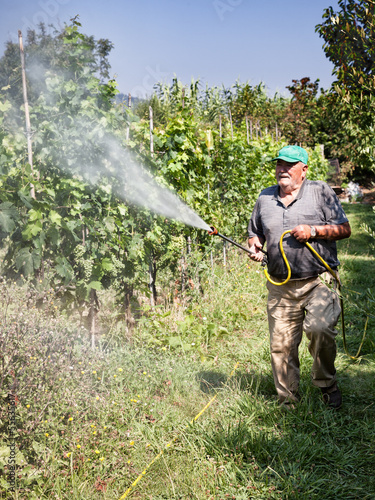 spraying pesticide in vineyard
