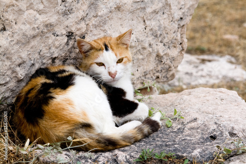 Tri-color cat who lives in the ruins of Athens,, Greece