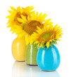 Beautiful sunflowers in color vases, isolated on white