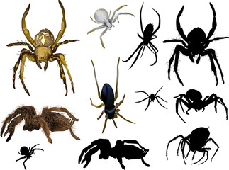 set of eleven isolated spiders
