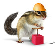 Funny chipmunk with detonator isolated on white