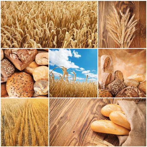 Fototapeta Wheat harvest concept