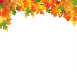 white autumn background with colorful leaf
