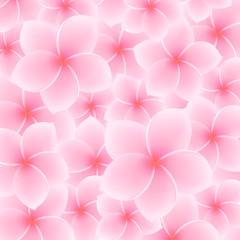 Plumeria, Frangipani pattern (background). Asian pink flower