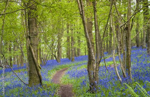 Fototapeten,idyllisch,morgens,schönheit,blau