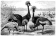 Bird : Egret - Aigrette